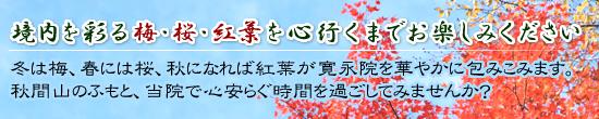 境内を彩る梅・桜・紅葉を心行くまでお楽しみください